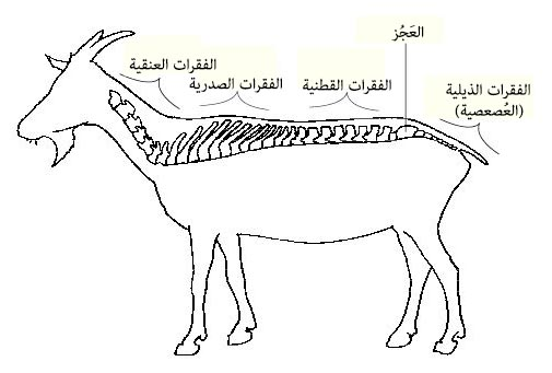 Fileanatomy And Physiology Of Animals Regions Of A Vertebral Column