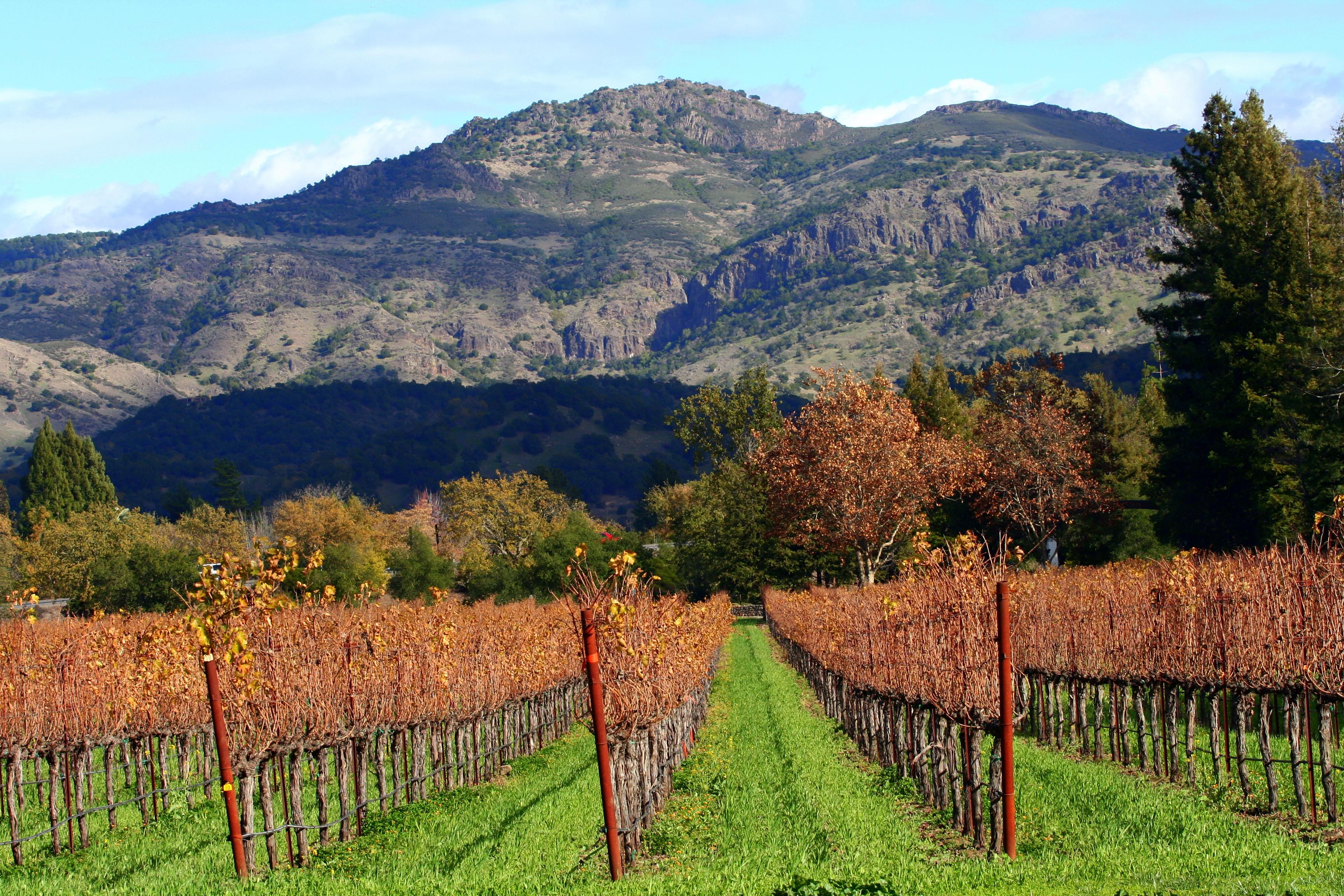Autumn in Napa Valley vineyards.jpg