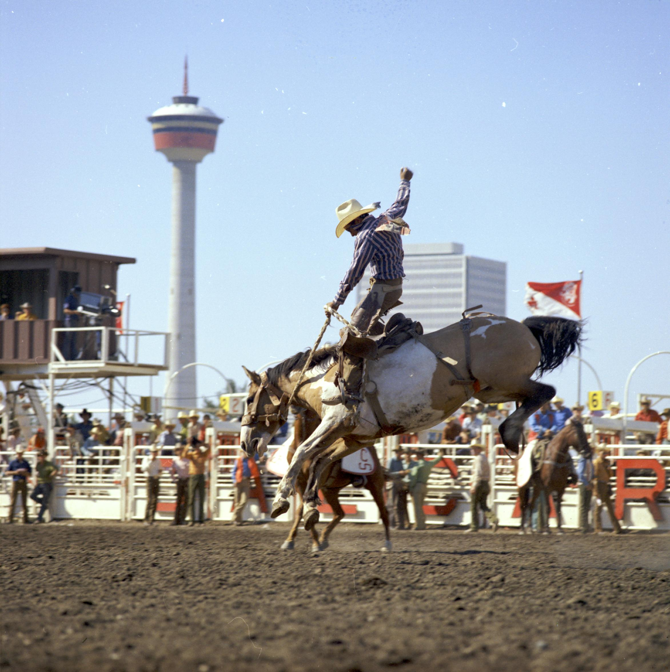 File Bronc Riding At The Calgary Stampede 35919323525