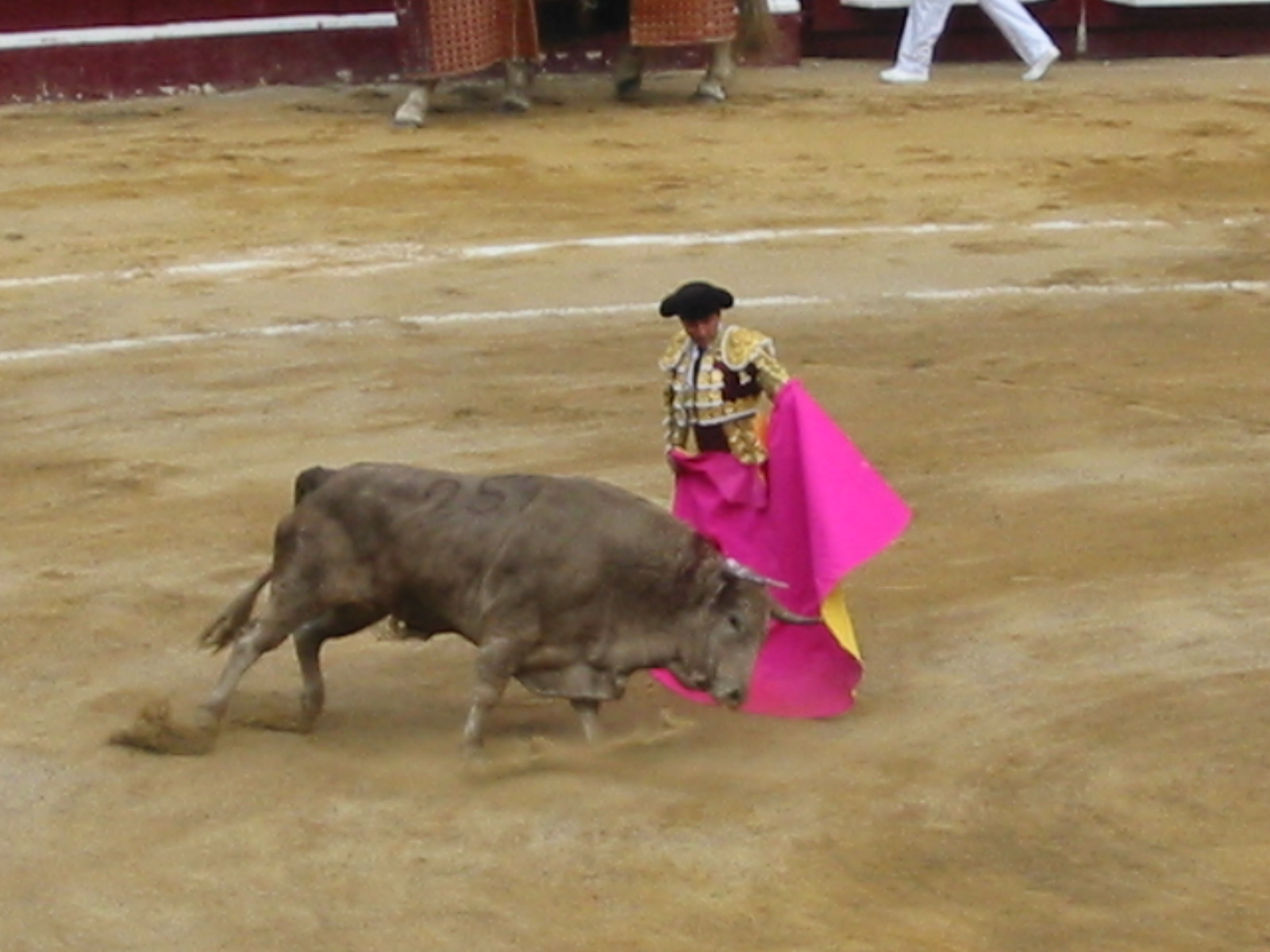 history of bull The history of bull riding started first back in the 1850's texas men rode bucking horses then after awhile they got tard of riding only bucking horses and wanted to ride something more rank and more fun animals so they dedcided to jump on bulls.
