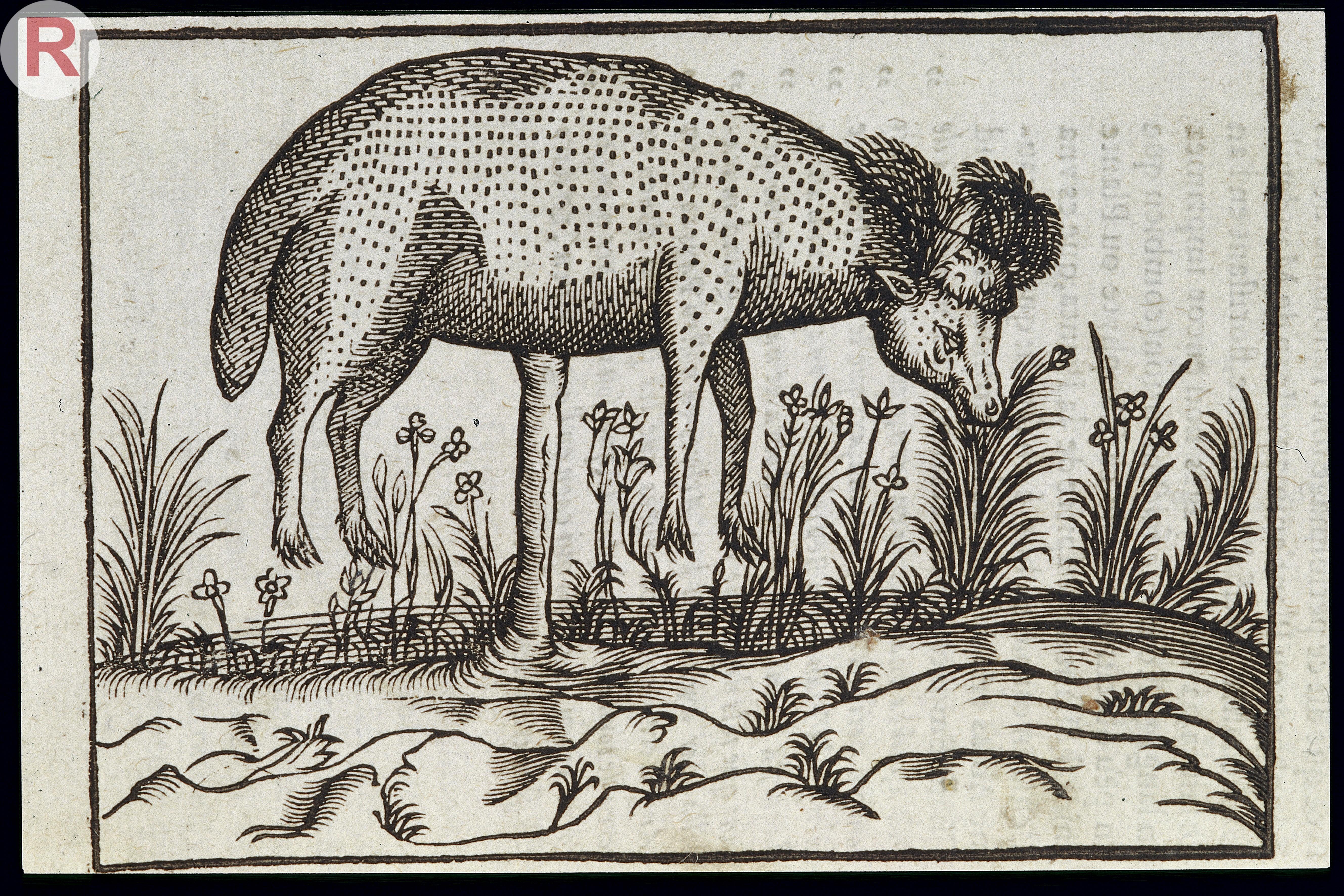 File c duret histoire admirable des plantes et wellcome Histoire des jardins wikipedia