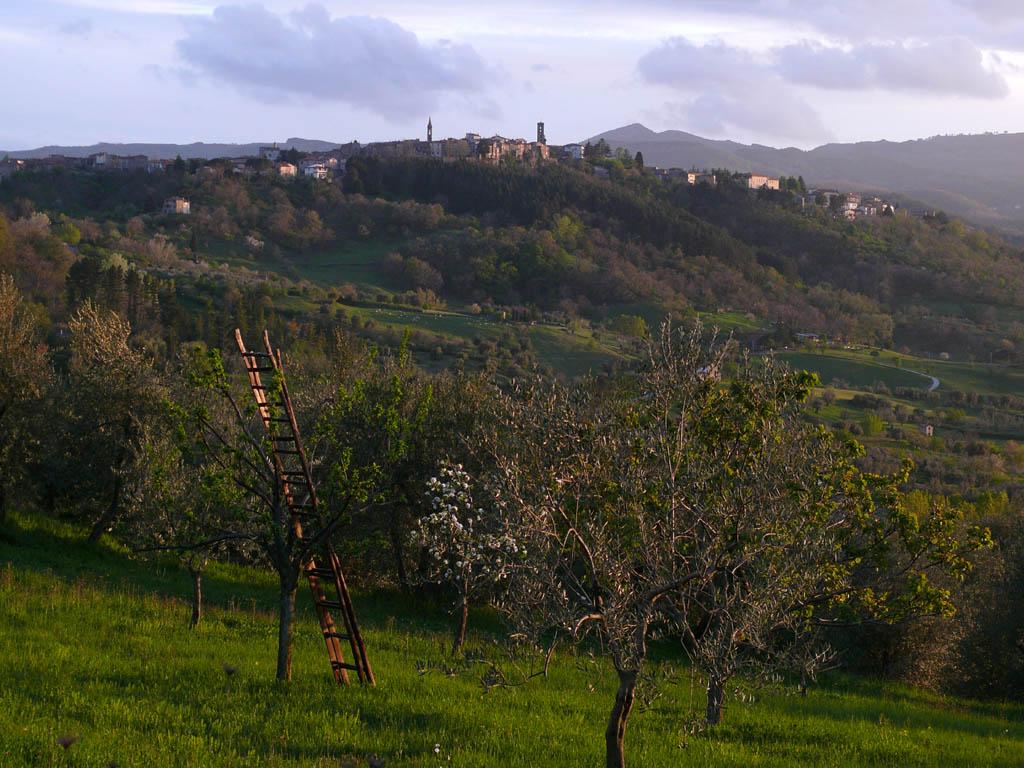 Casteldelpiano z12.jpg