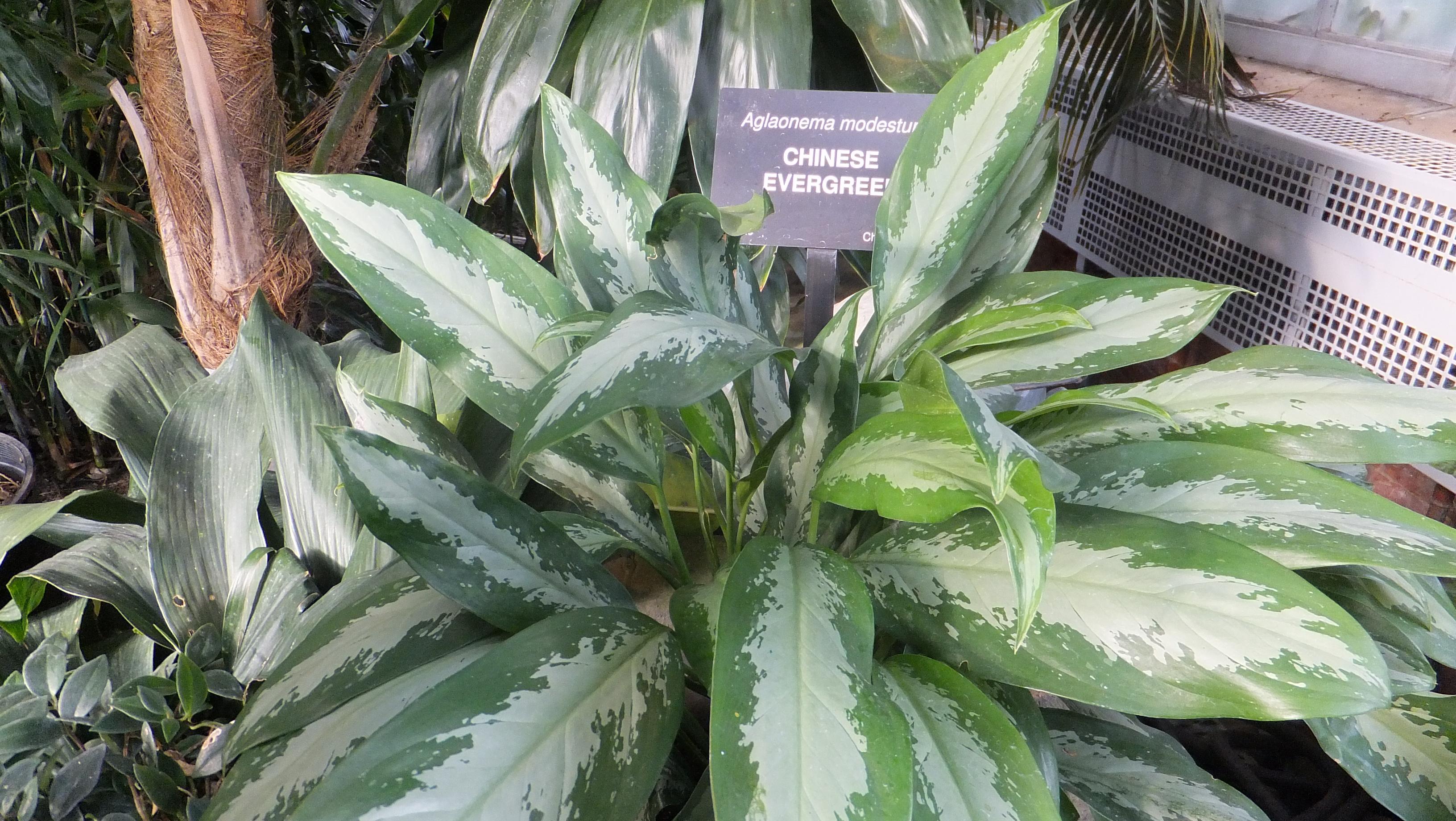 3 Easy Indoor Plants | NewPro Blog