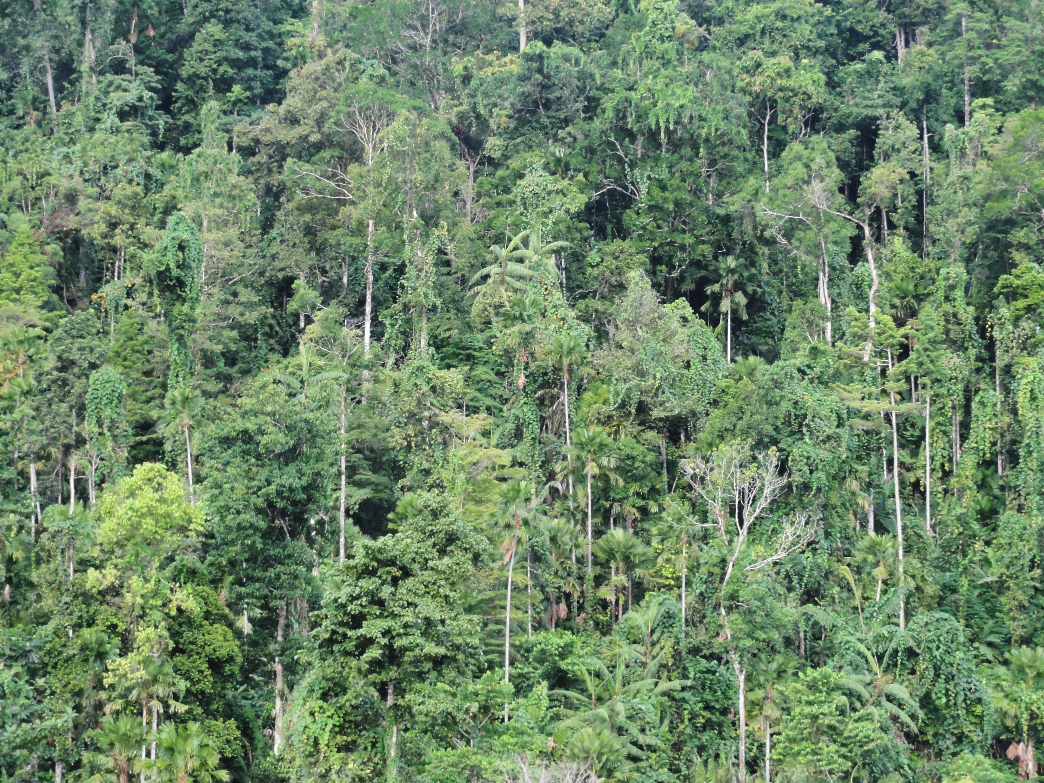 Taman Nasional Aketajawe Lolobata Wikipedia Bahasa Indonesia Ensiklopedia Bebas