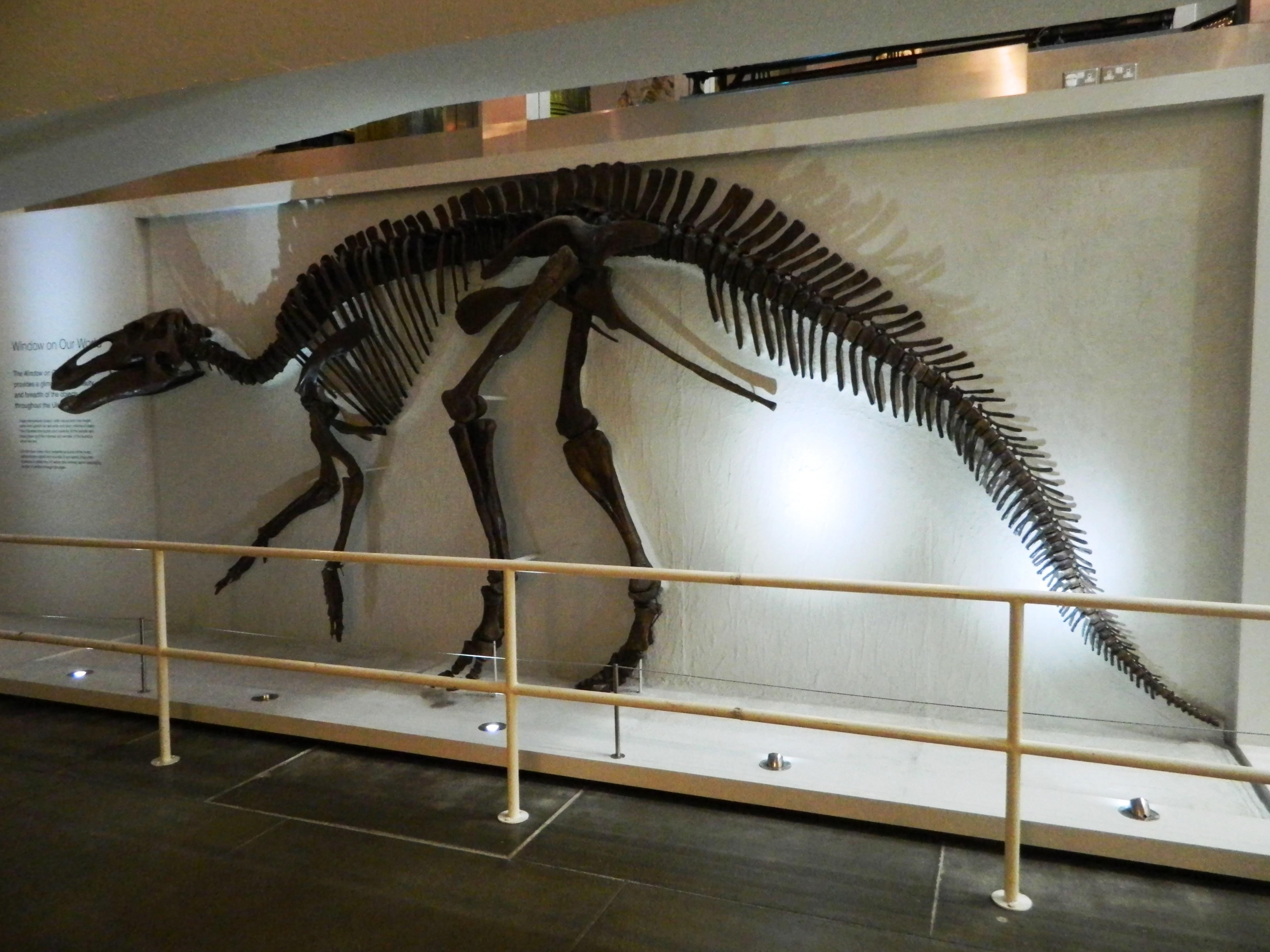 edmontosaurus dinosaur king - photo #18