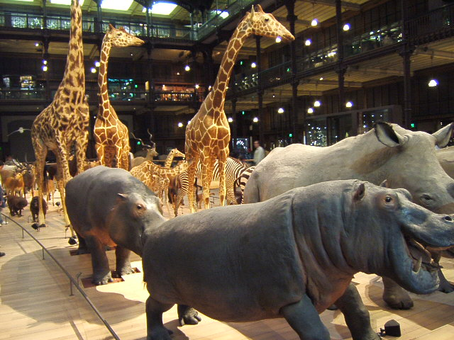 File grande galerie evolution musee histoire naturelle for Histoire des jardins wikipedia