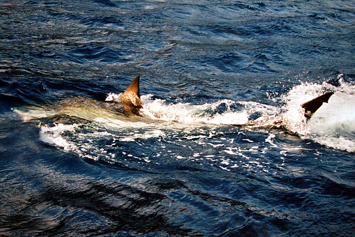 Image Result For Green Land Shark