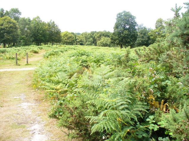 Headley Heath - geograph.org.uk - 1396316