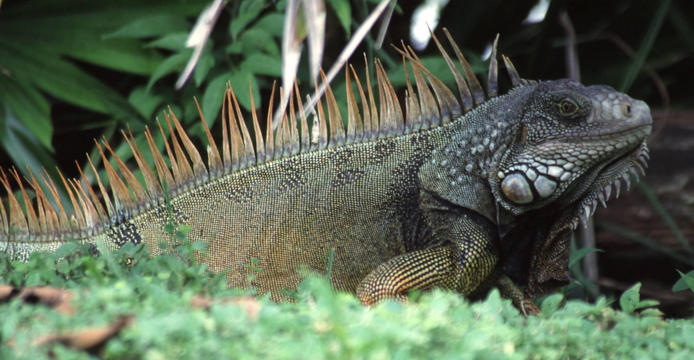 96 Gambar Hewan Reptil Dan Nama Latinnya Terbaik