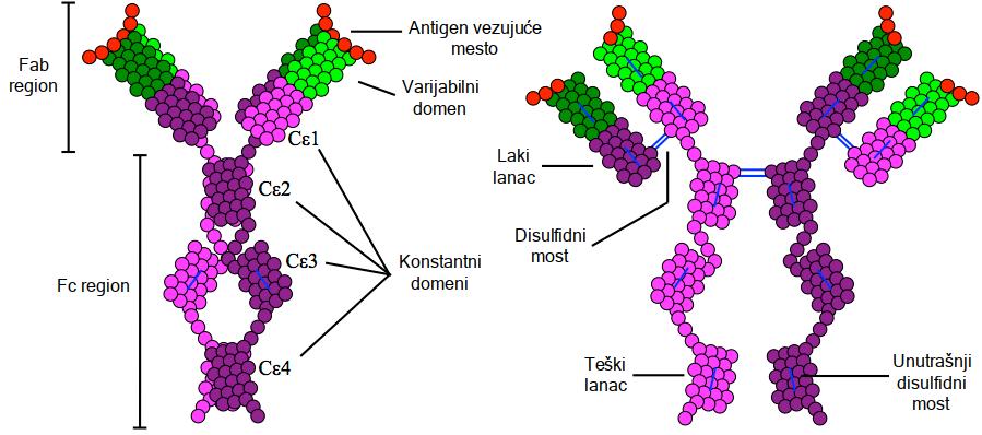 immunoglobulin e paraziták)