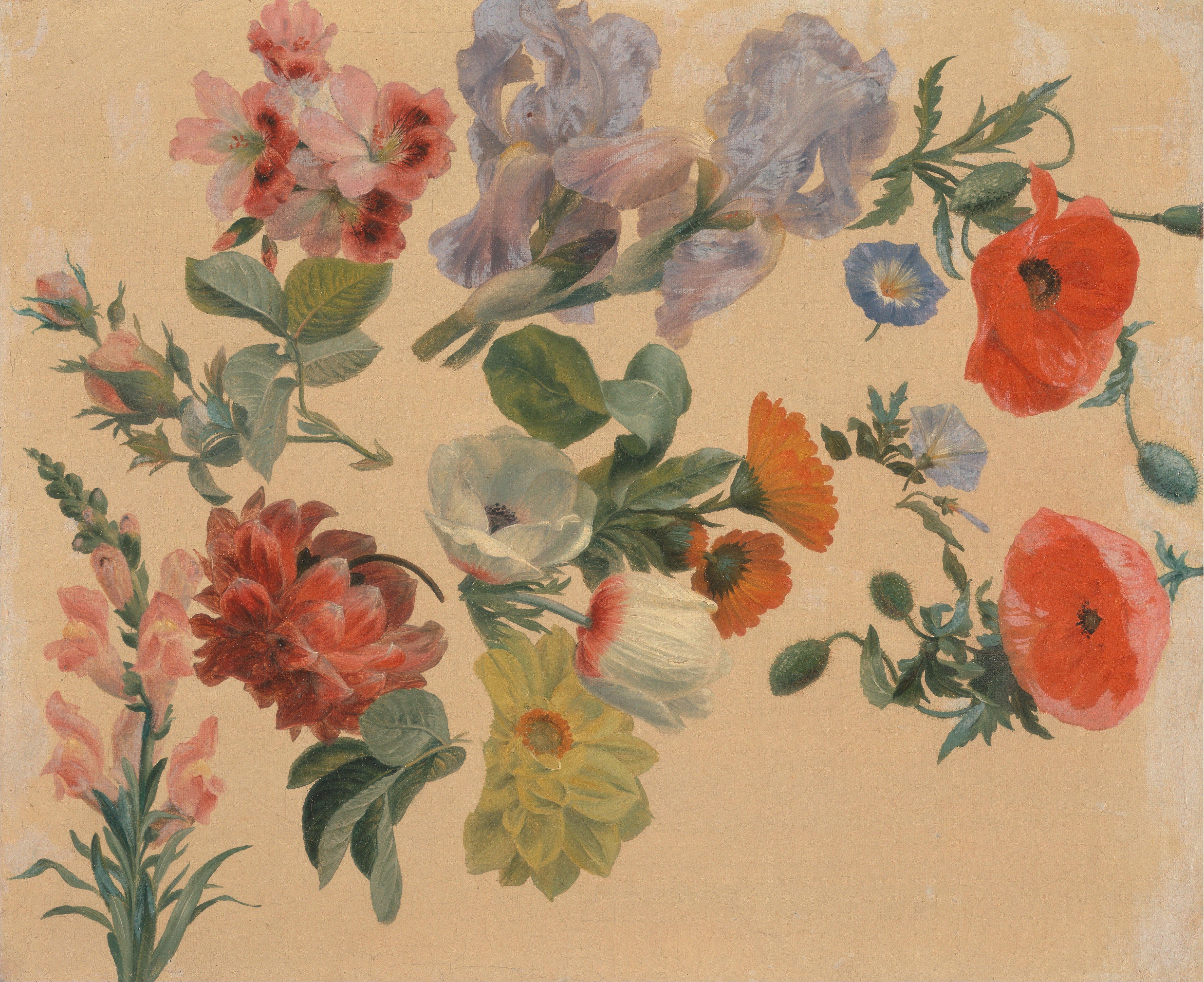 file jacques laurent agasse studies of summer flowers google art