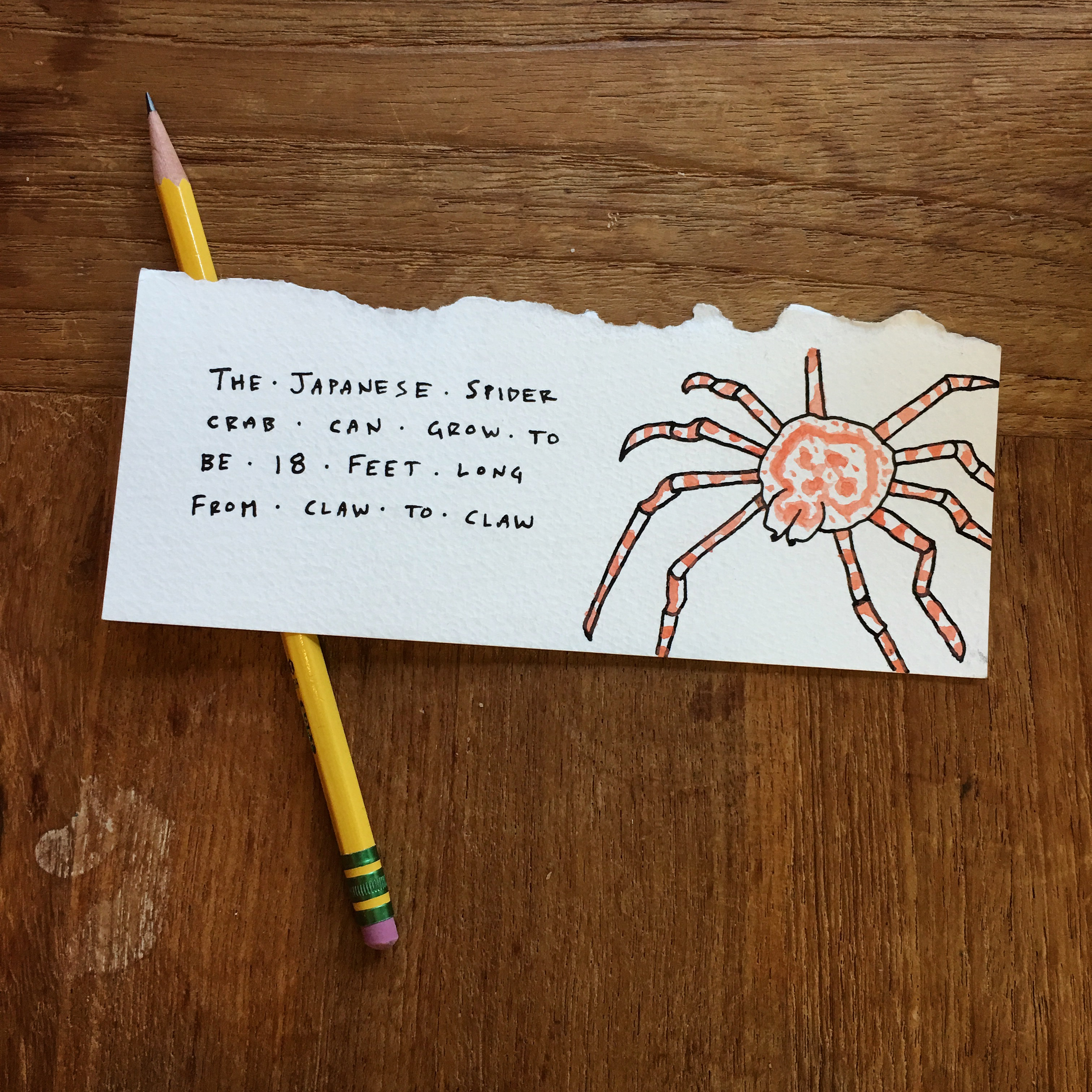 filejapanese spider crabjpg