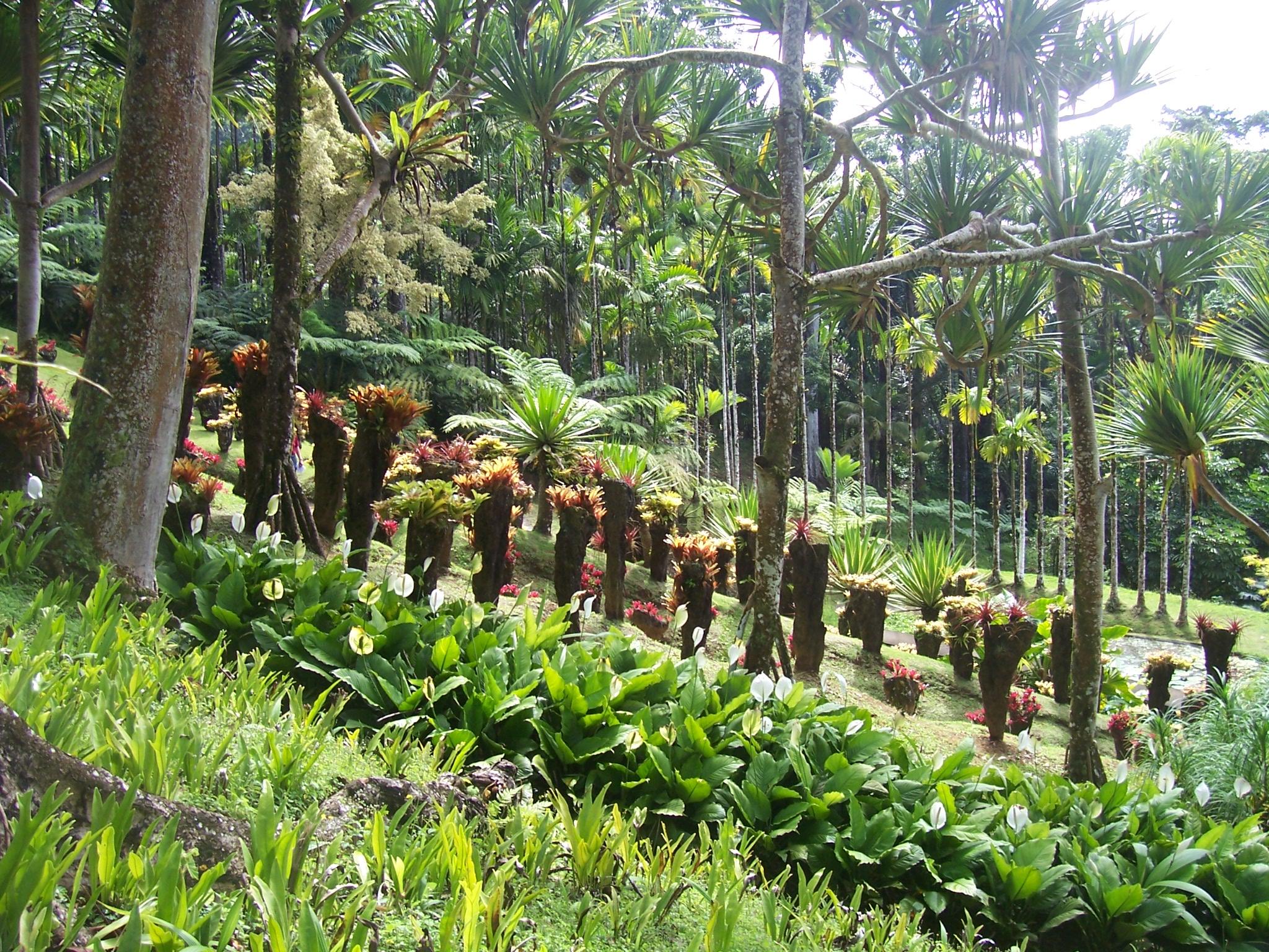 Balata for Jardin balata