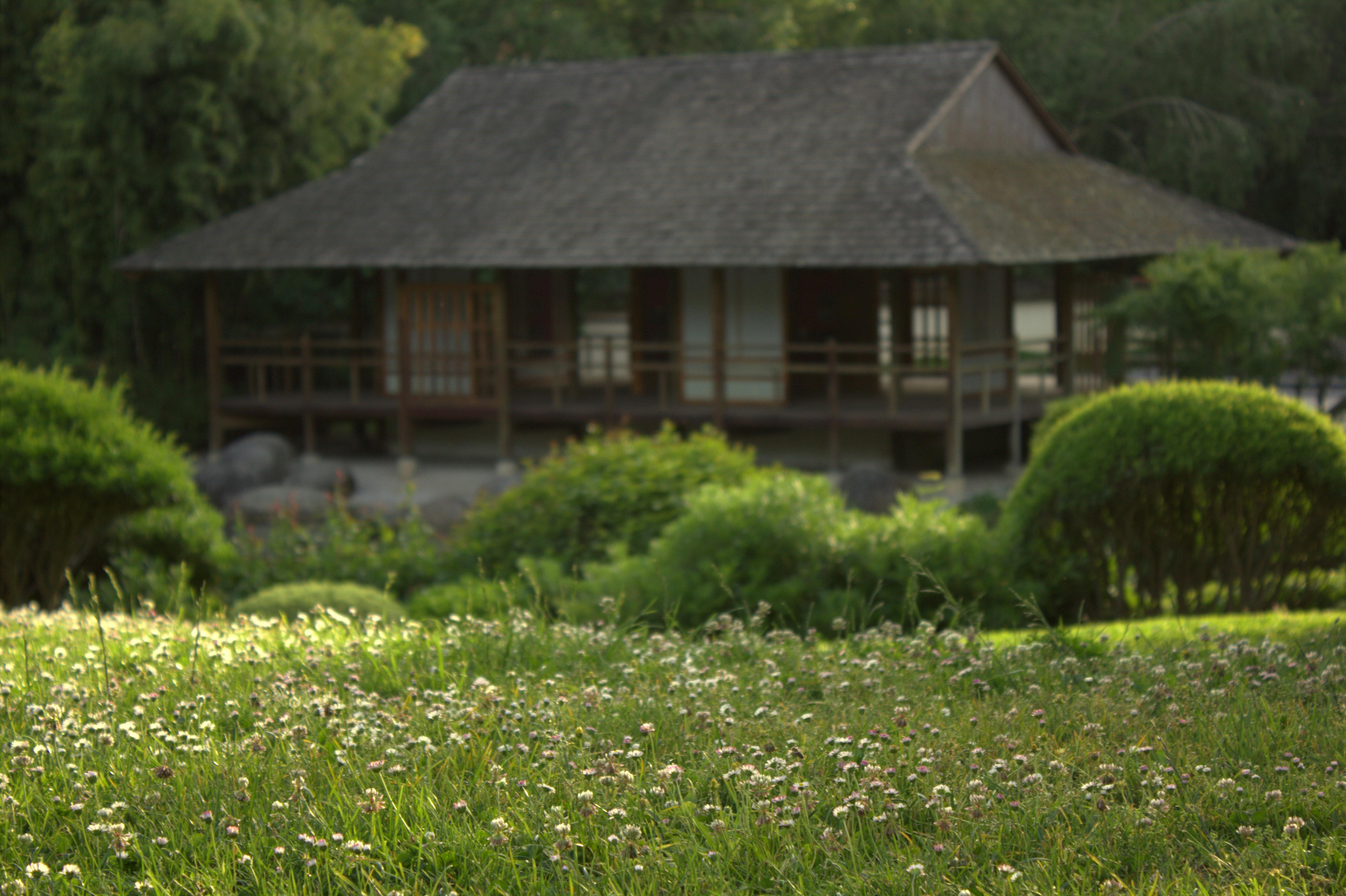 File Jardin japonais Toulouse paquerette Wikimedia mons