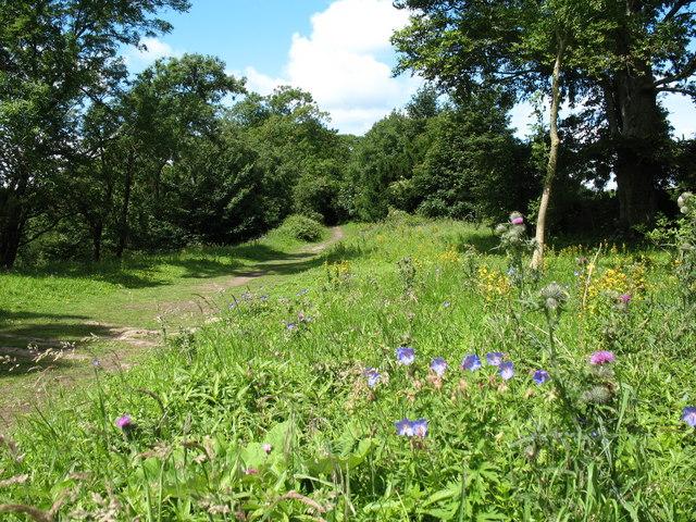 Leyburn Shawl footpath - geograph.org.uk - 890787