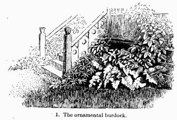 The ornamental burdock