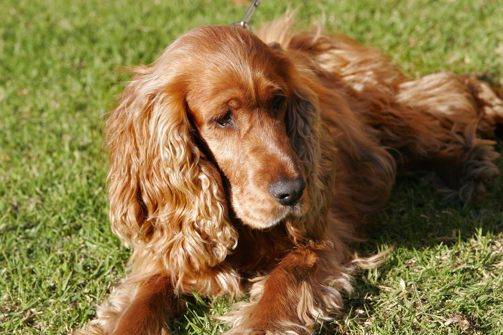 Small Dog Breeds With Relaxed Temperments