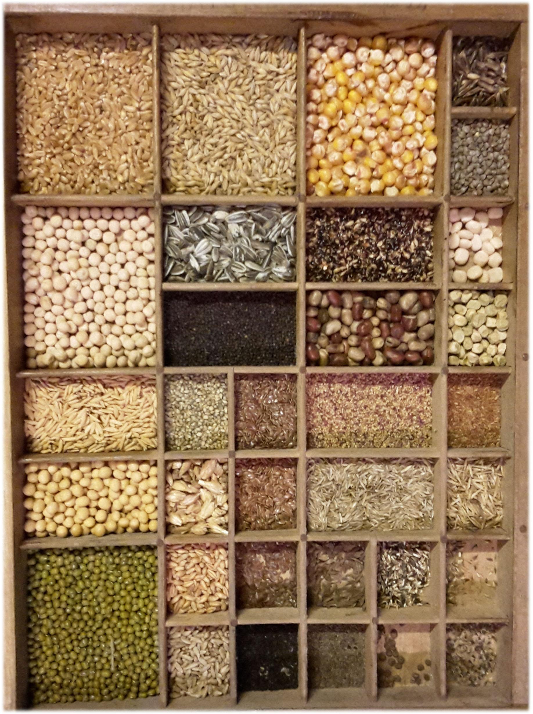 Fichier semences de diff rentes esp wikip dia - Differentes especes de pins ...