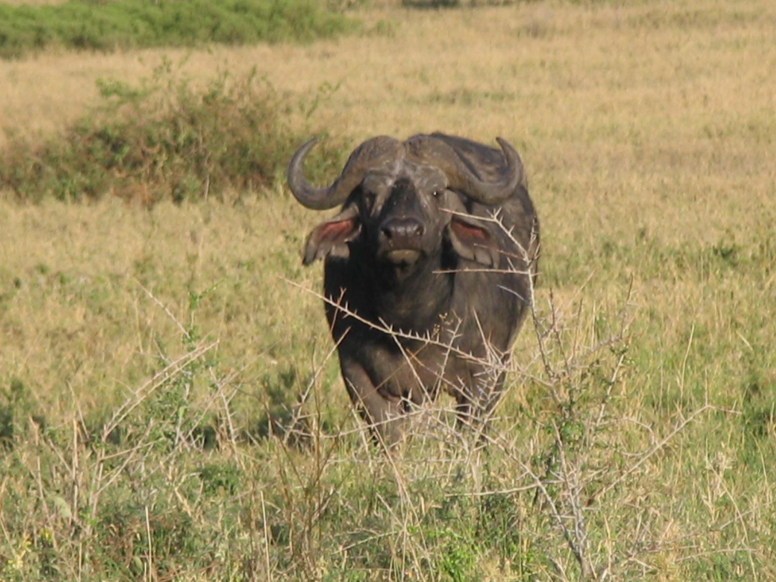 Serengeti National Park Wikipedia - 9 things to see and do in serengeti national park