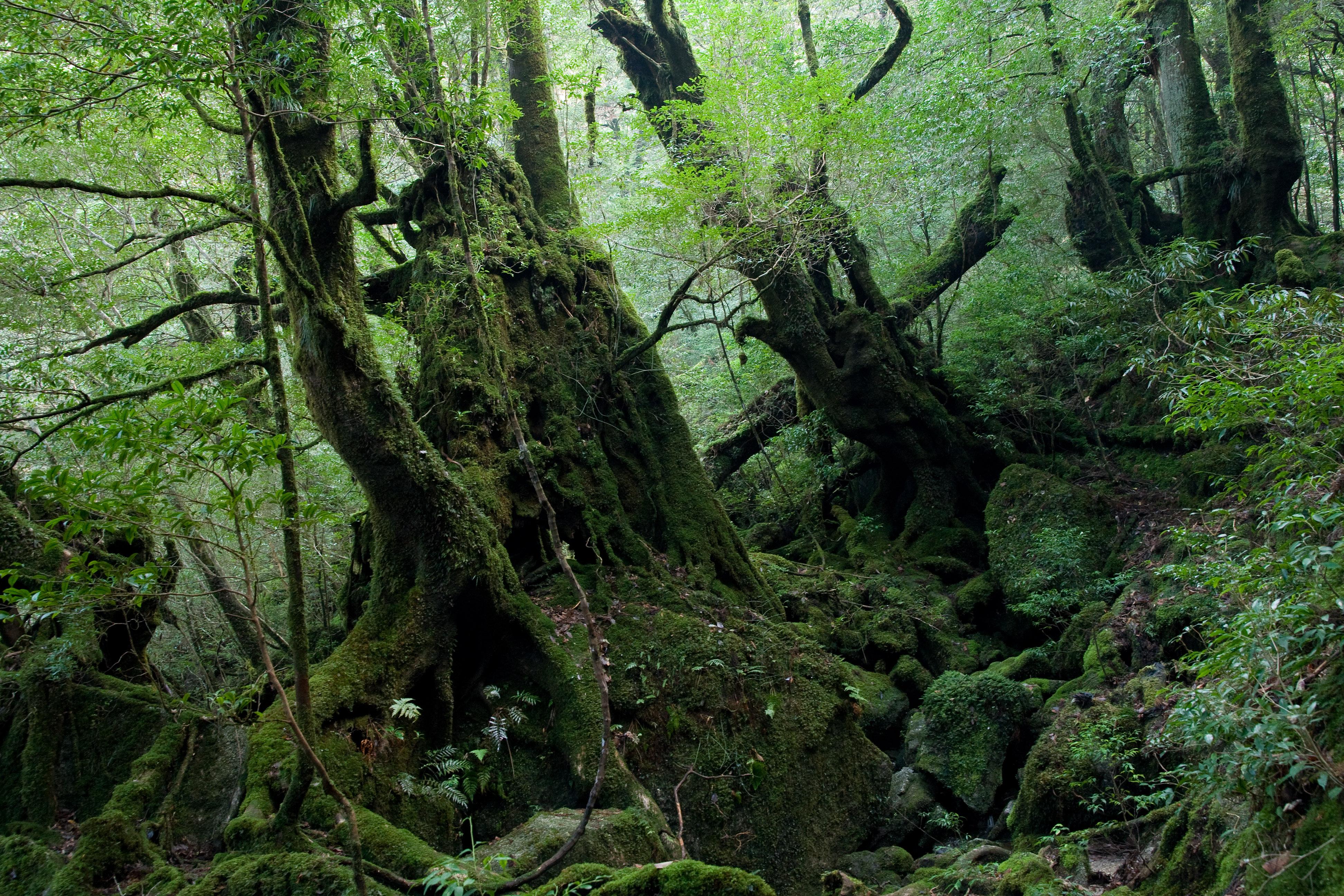 白谷雲水峡の森林