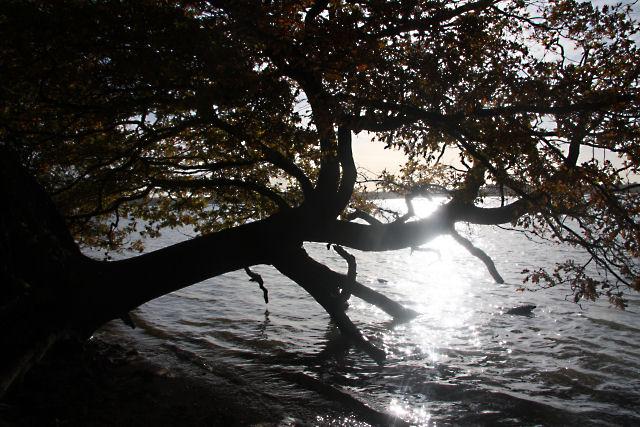 Sunlight on a fallen tree - geograph.org.uk - 1587506