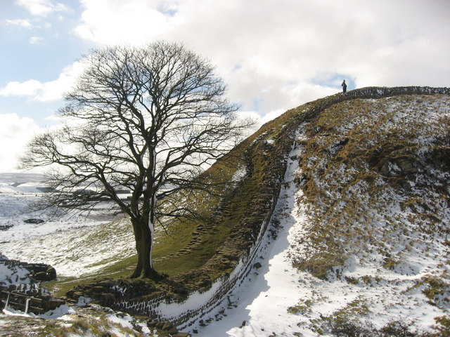 Sycamore Gap (4) - geograph.org.uk - 750542