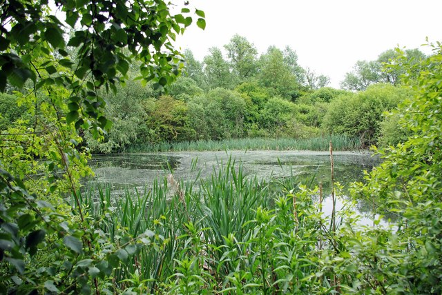 Teal Pond - geograph.org.uk - 1323758