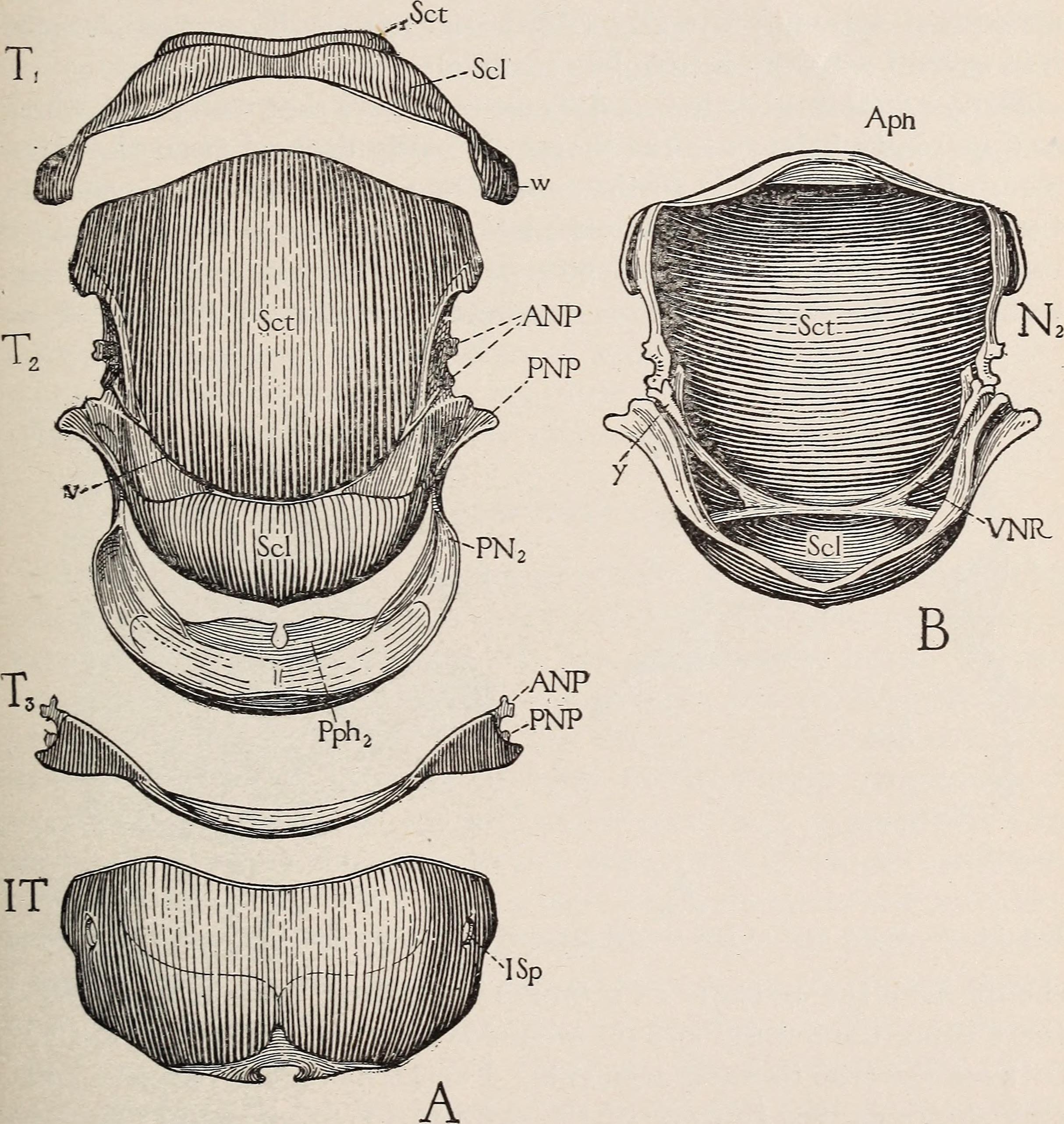 Filethe Anatomy Of The Honey Bee 1910 18168034436g