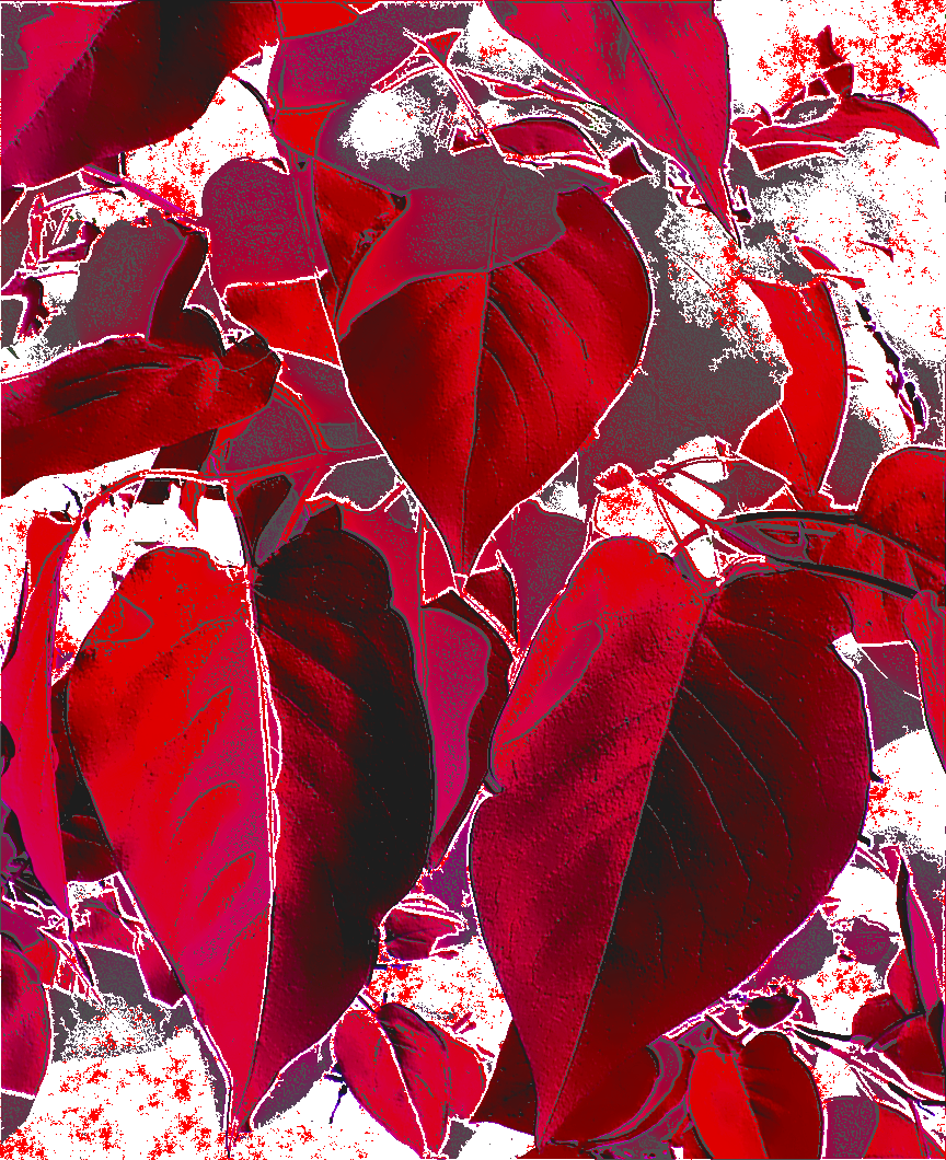 File Valentine S Day Hearts Png Wikimedia Commons