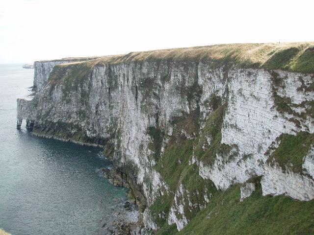 Bempton Cliffs - geograph.org.uk - 45067