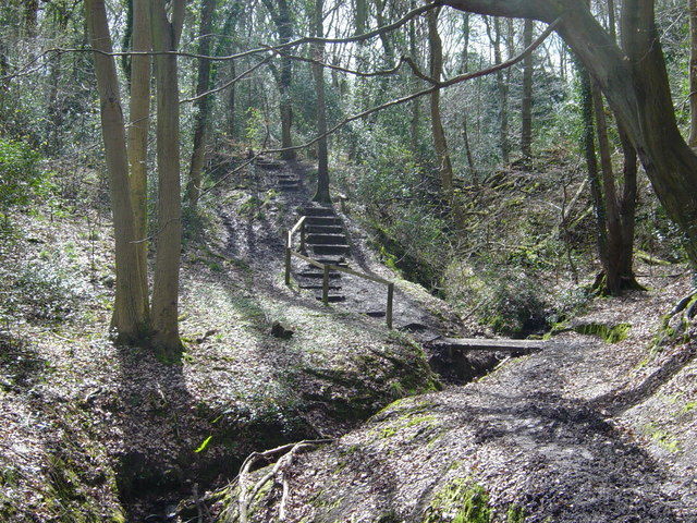 Benthall Woods - geograph.org.uk - 161836