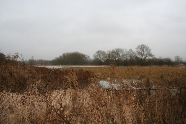 Cholsey Marsh - geograph.org.uk - 670918