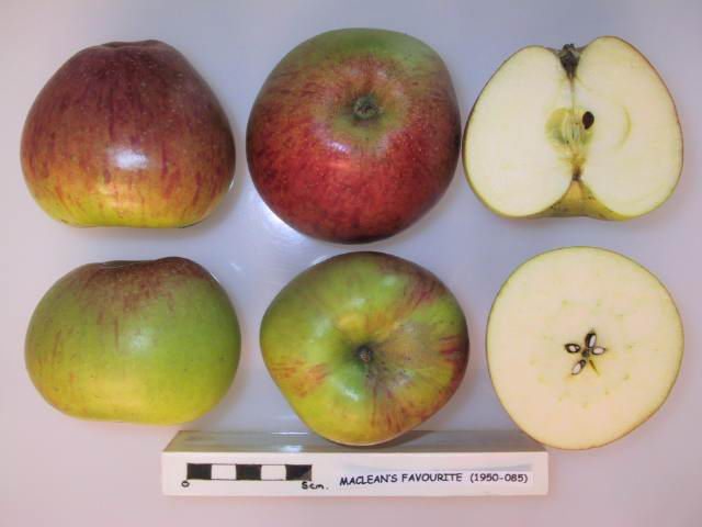 cross section of maclean 27s favourite 2c national fruit collection 28acc 1950 085 29 jpg