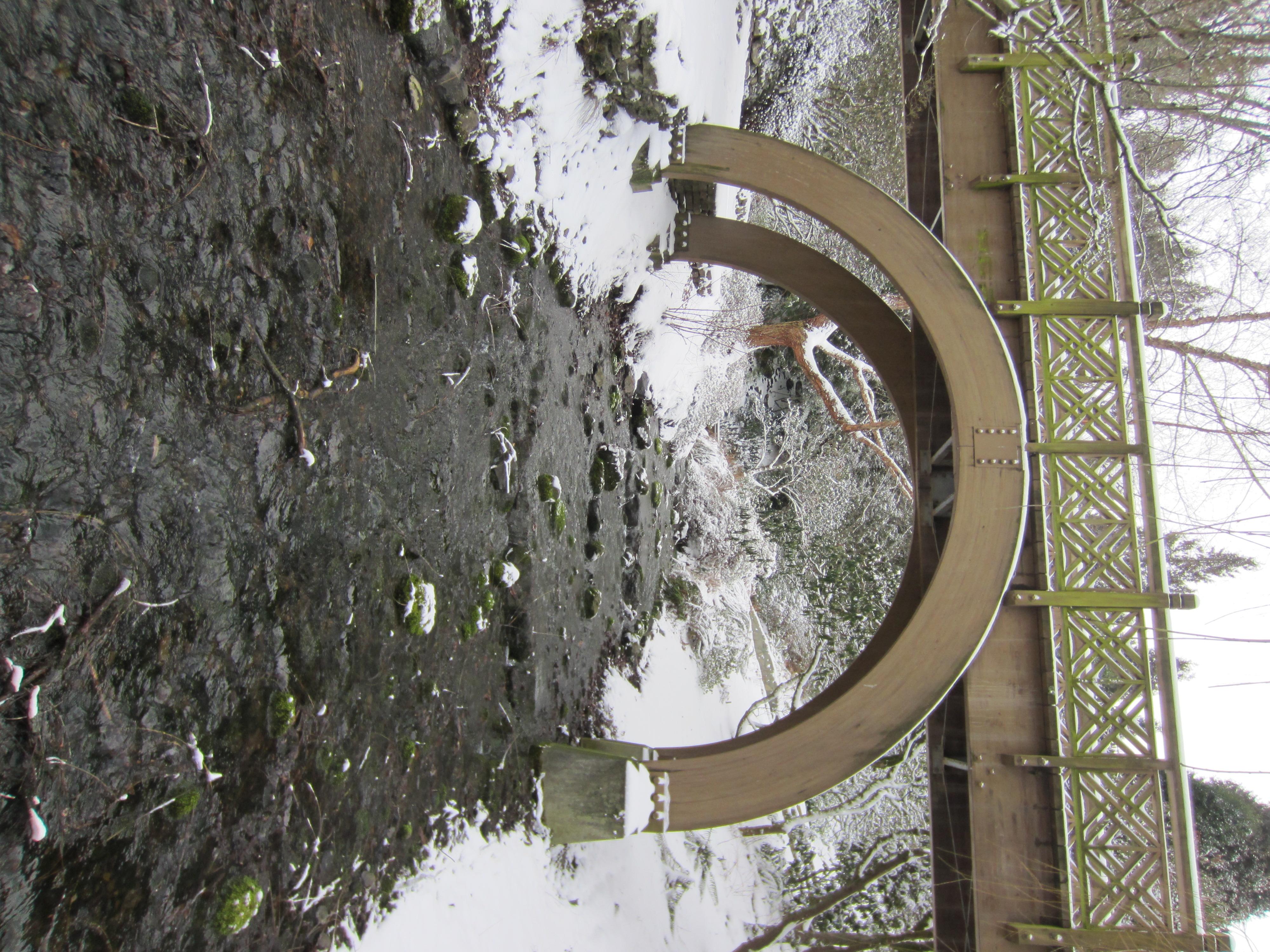 File crystal springs rhododendron garden portland 2014 17 jpg wikipedia for Crystal springs rhododendron garden