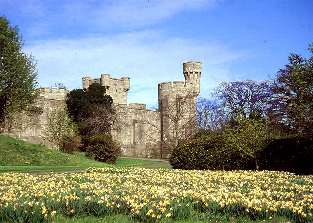 Daffodils at Penrhyn Castle, Bangor - North Wales - geograph.org.uk - 28725