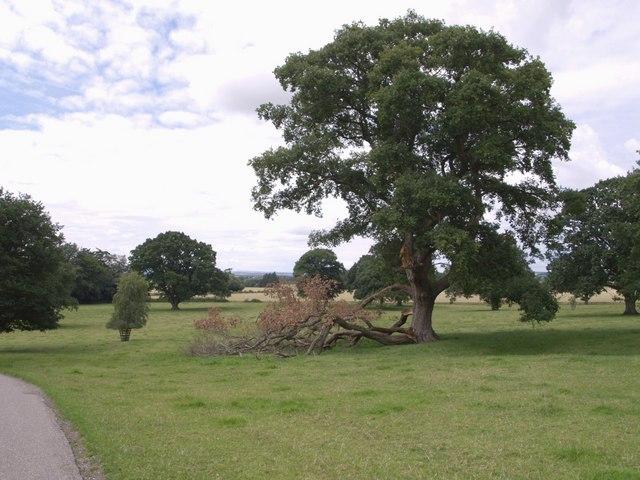 Dillington Park - geograph.org.uk - 492341