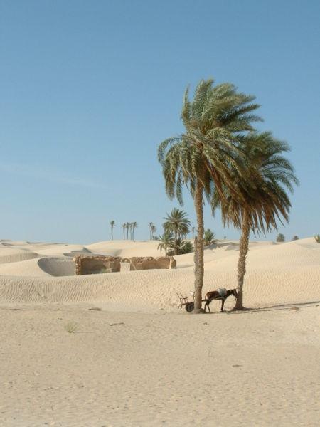 File:Douz desert.jpg