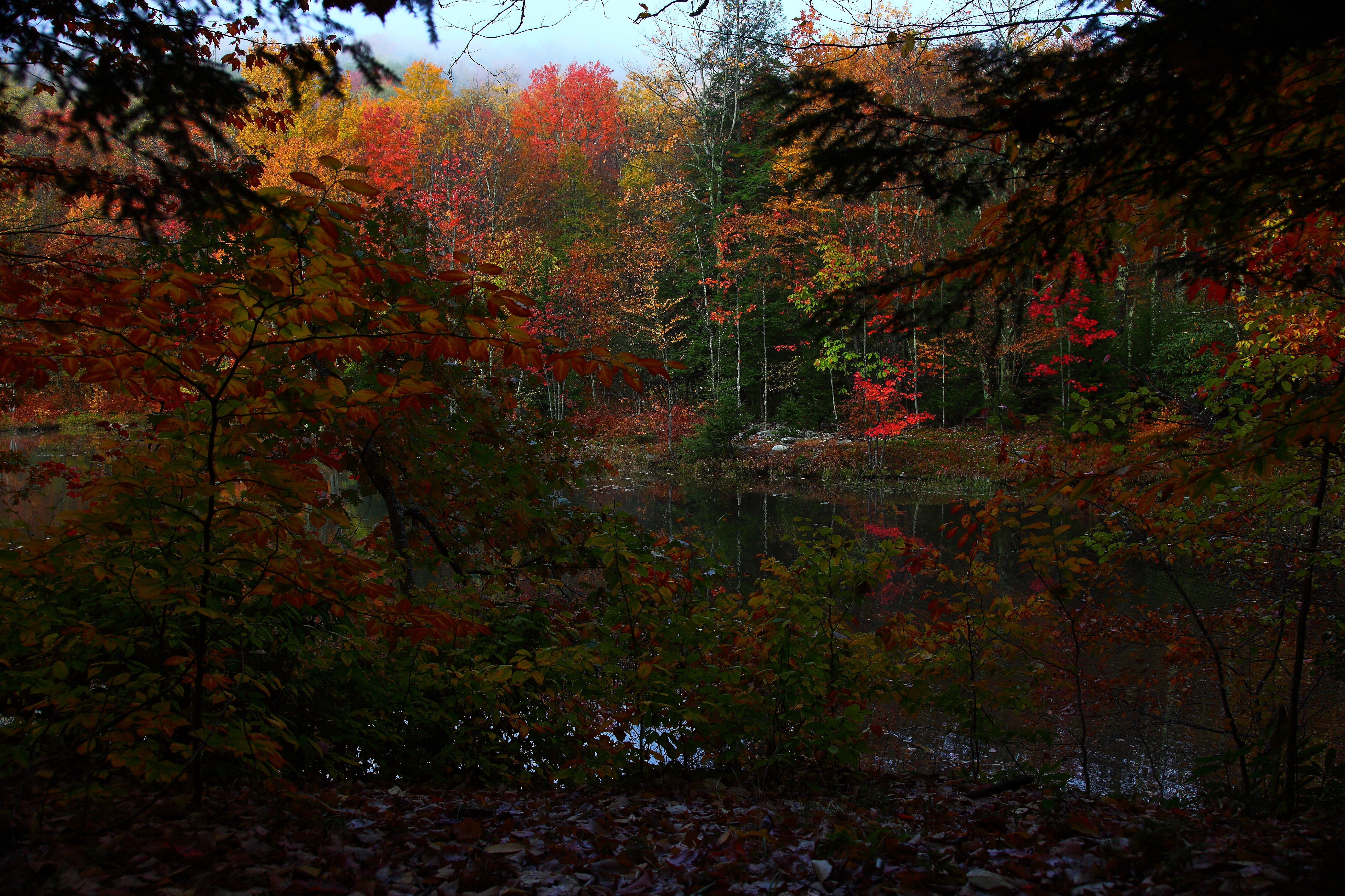 File Fall Forest Foliage Early Morning West Virginia