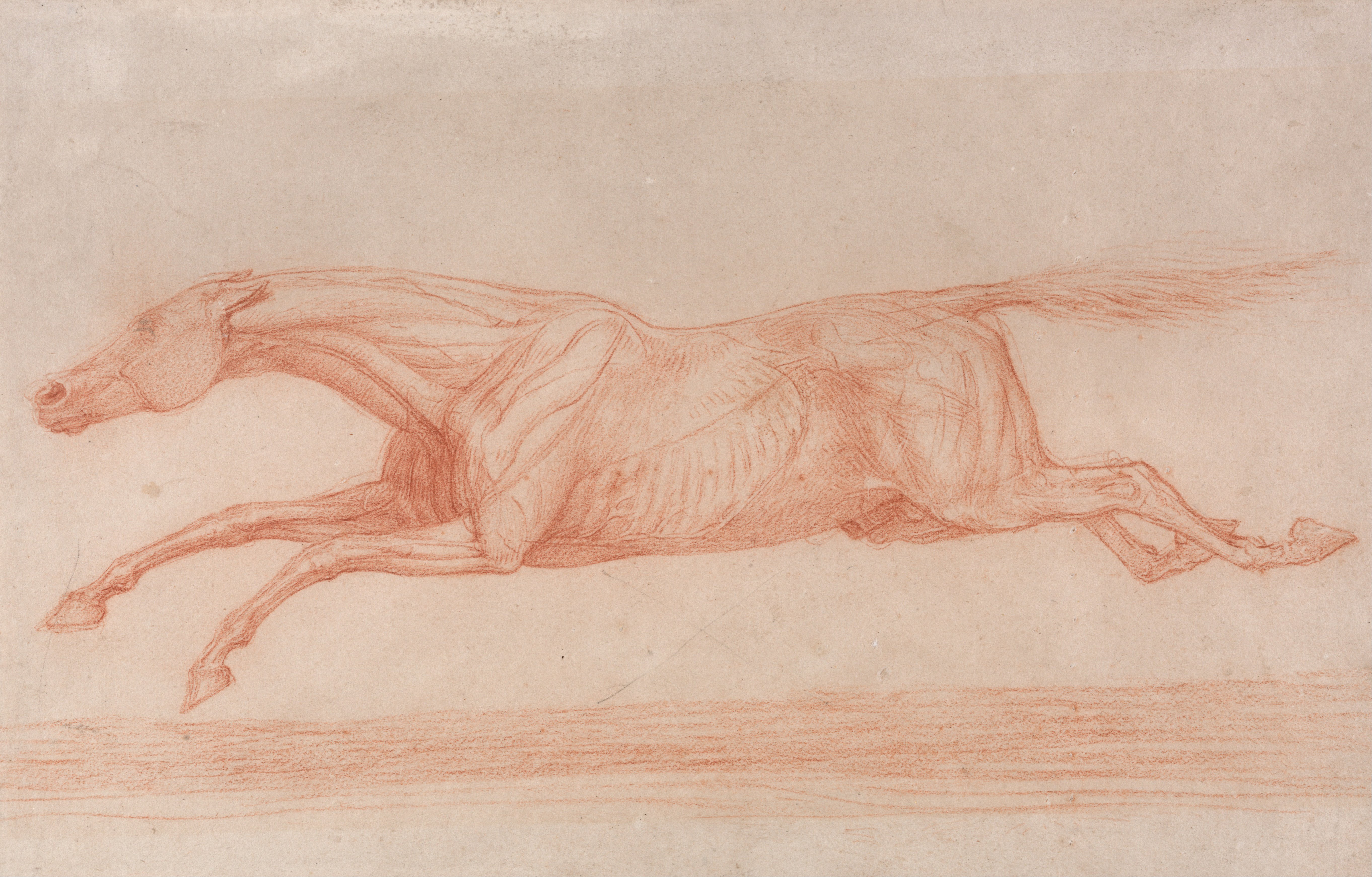 Filegeorge Stubbs Study Of A Racehorse In Action Galloping To