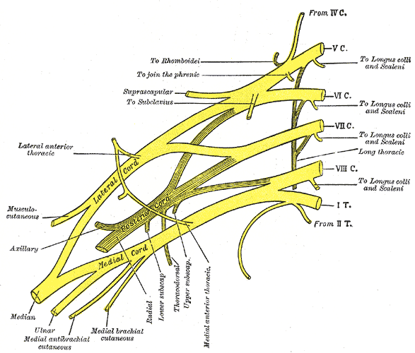 Posterior interosseous nerve  Radiology Reference Article