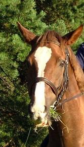 HorseWithBlaze.jpg