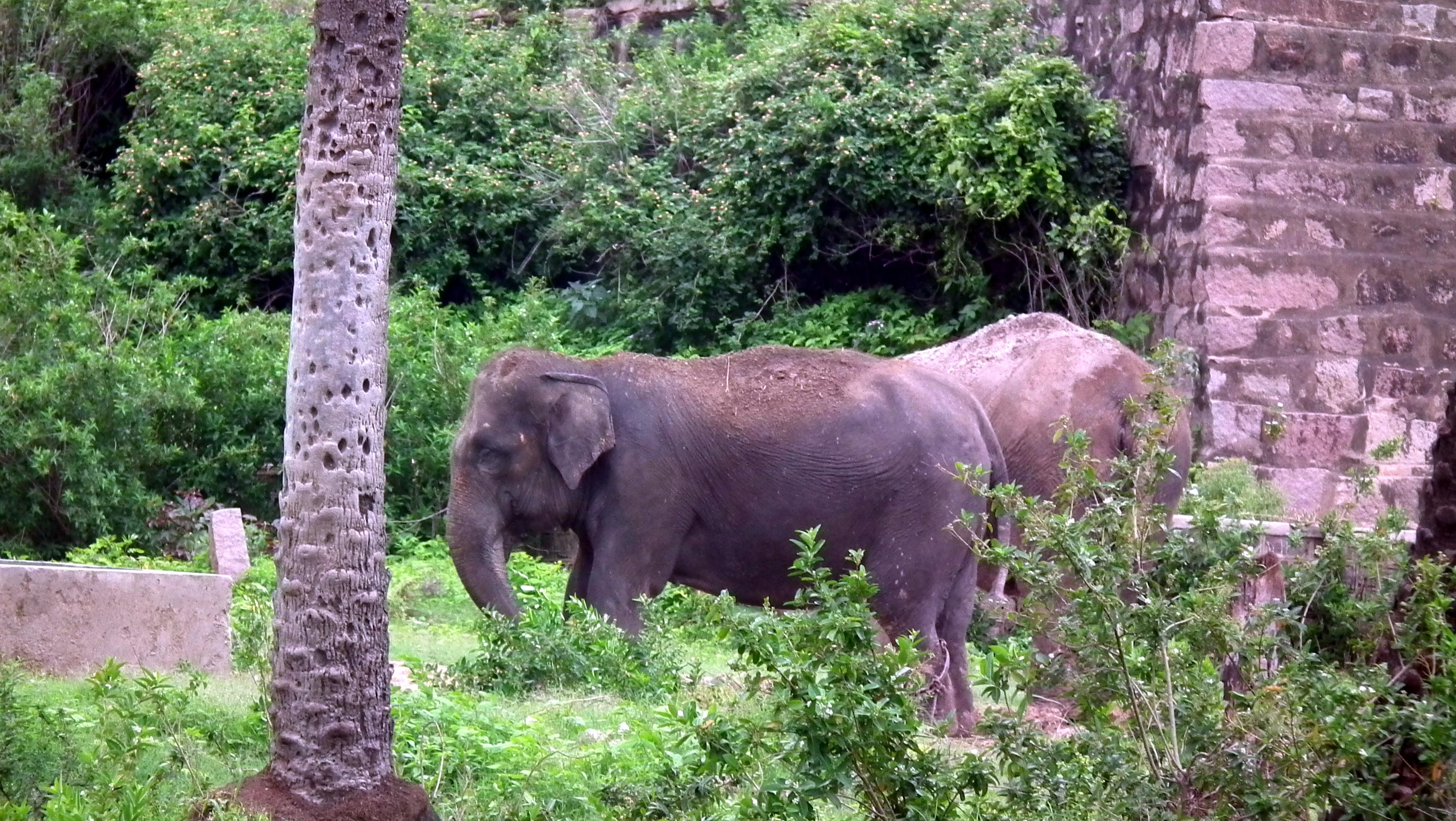 Nehru Zoological National Park, Hyderabad