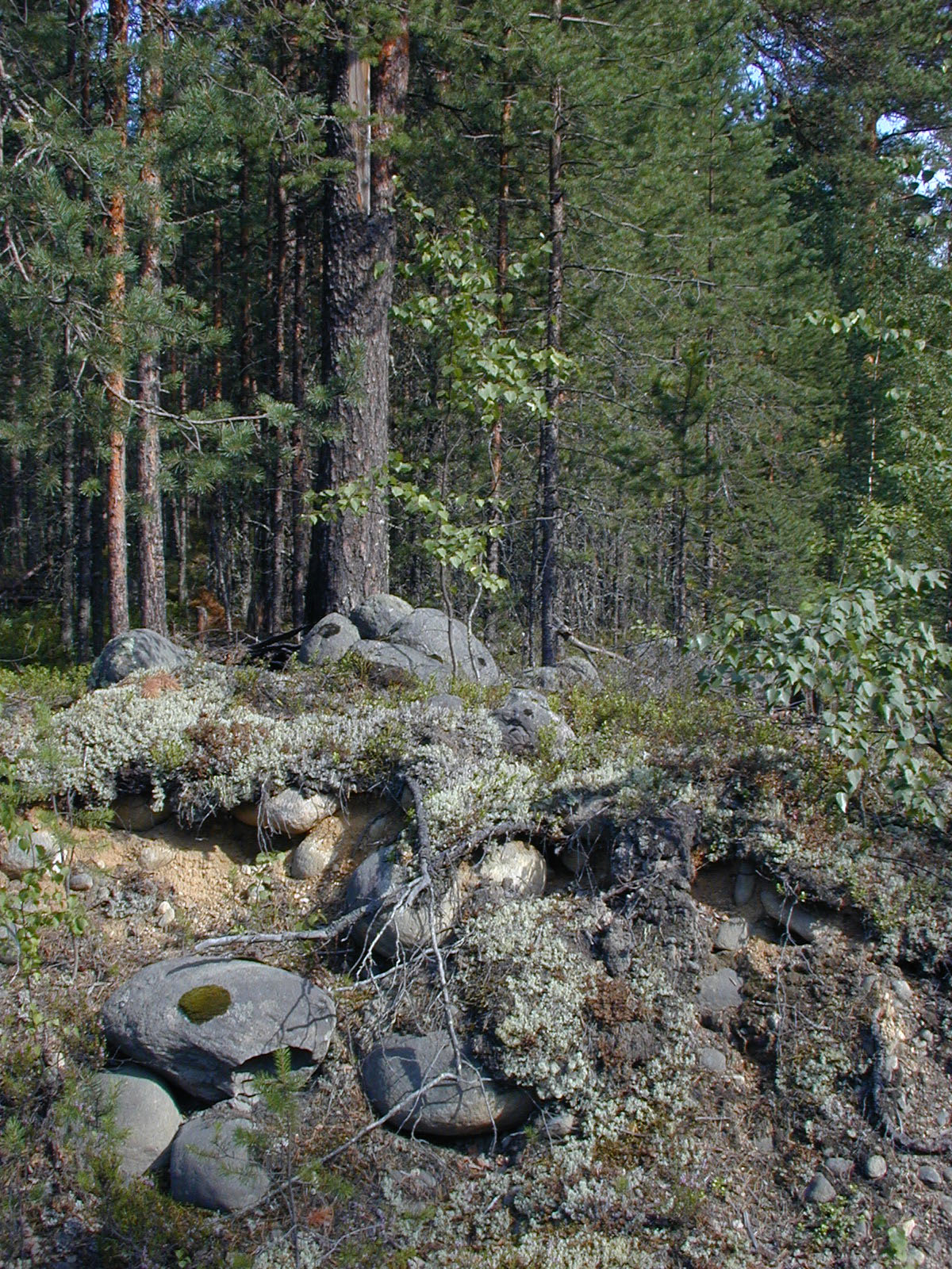 Karelian Old Growth Forest