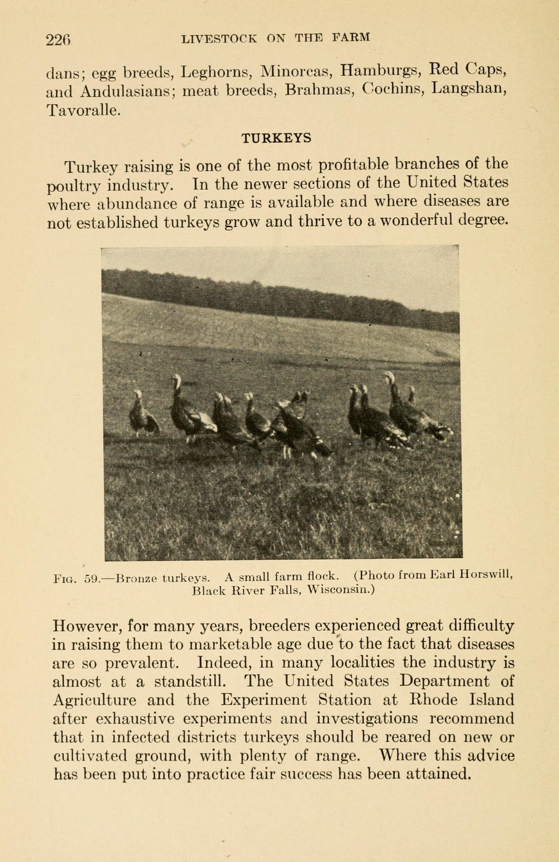 File:Livestock on the farm (Page 226) BHL18507719 jpg - Wikimedia