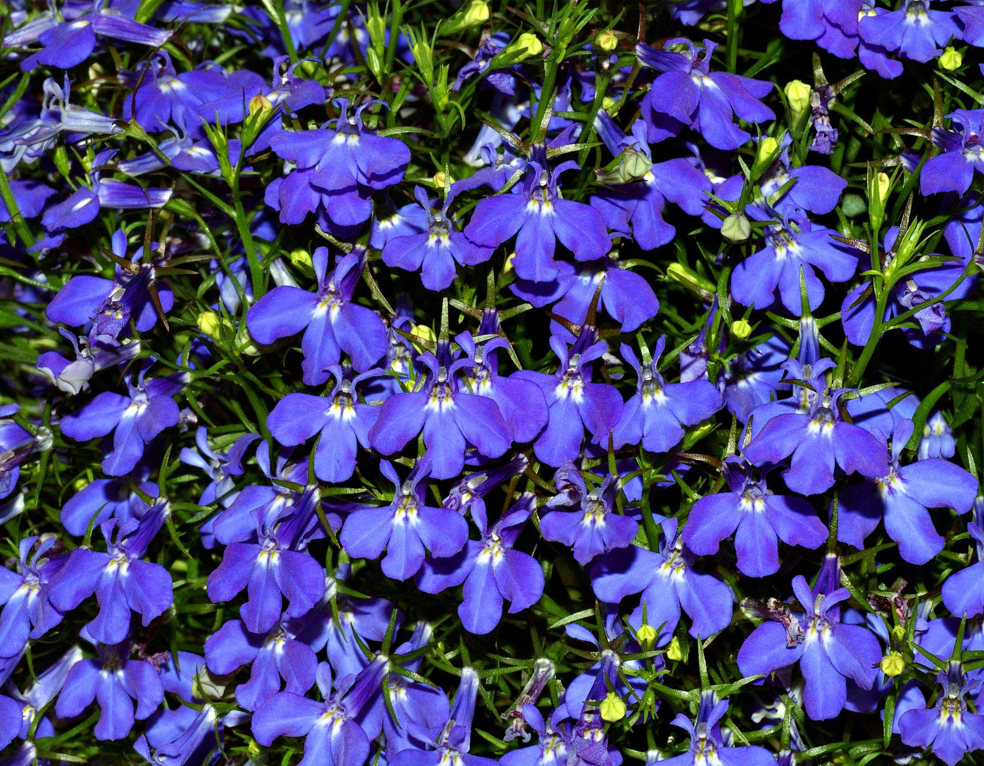 Flores de janeiro a dezembro 37