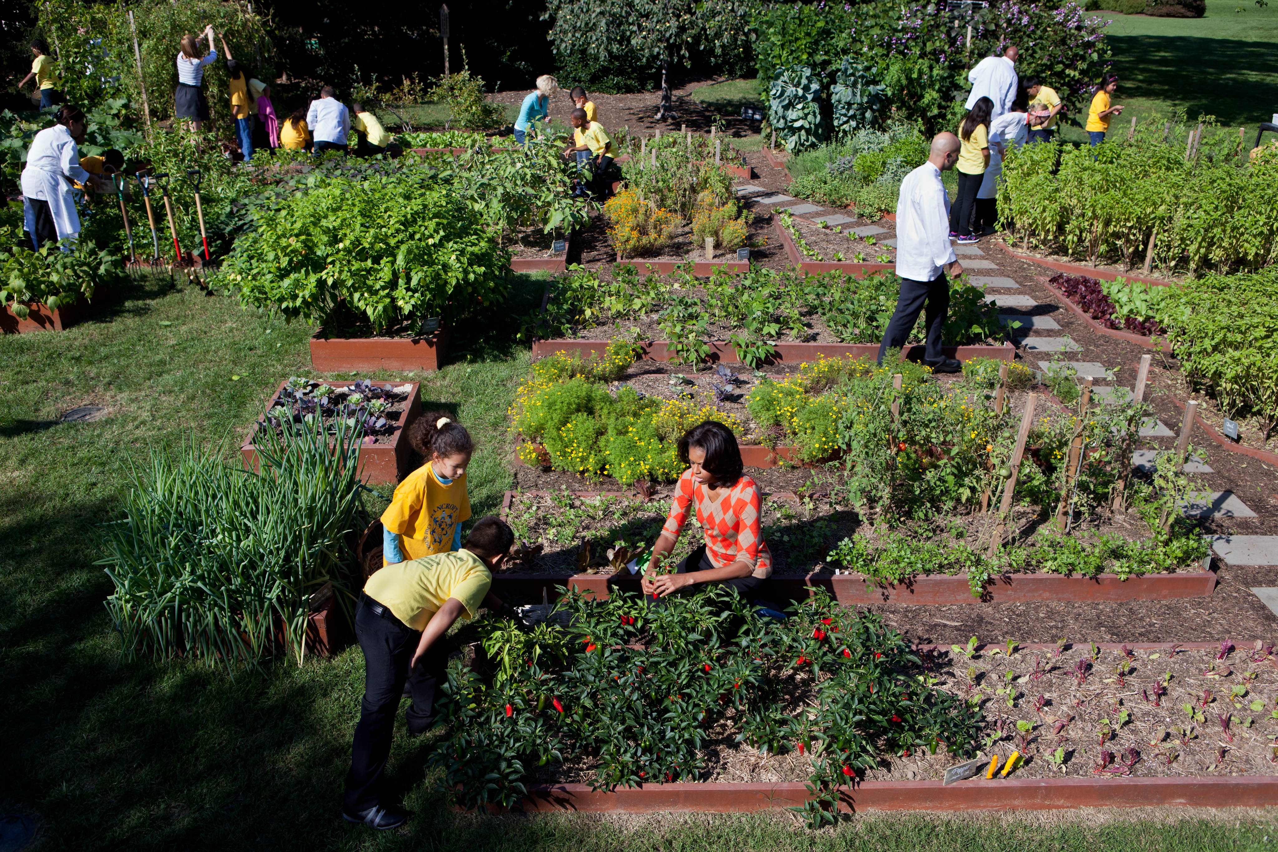 File:Michelle Obama and White House chefs join children to harvest ...