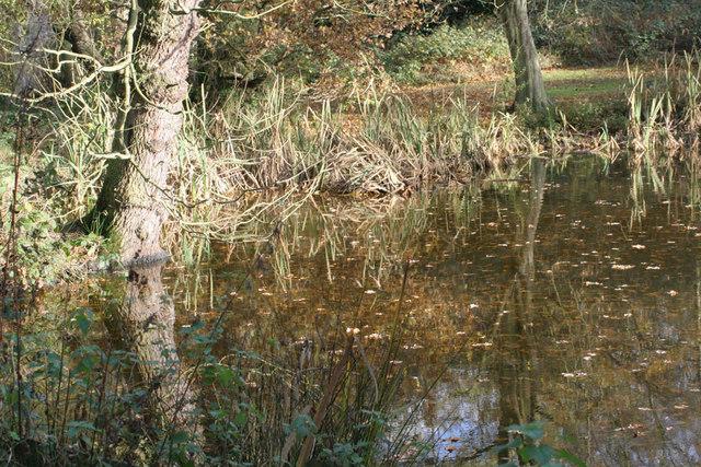 Pond at Danbury Lakes - geograph.org.uk - 320398