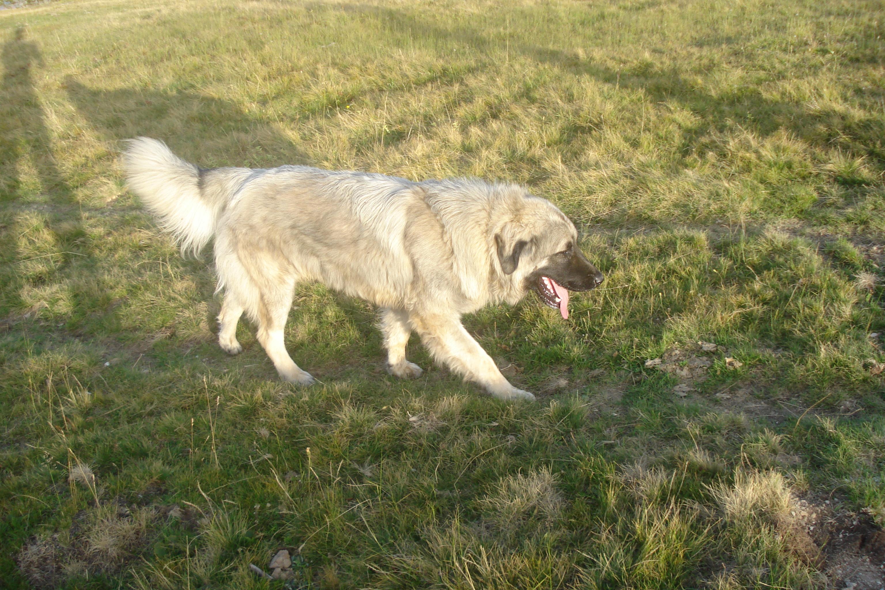 Dog Breeds Wiki
