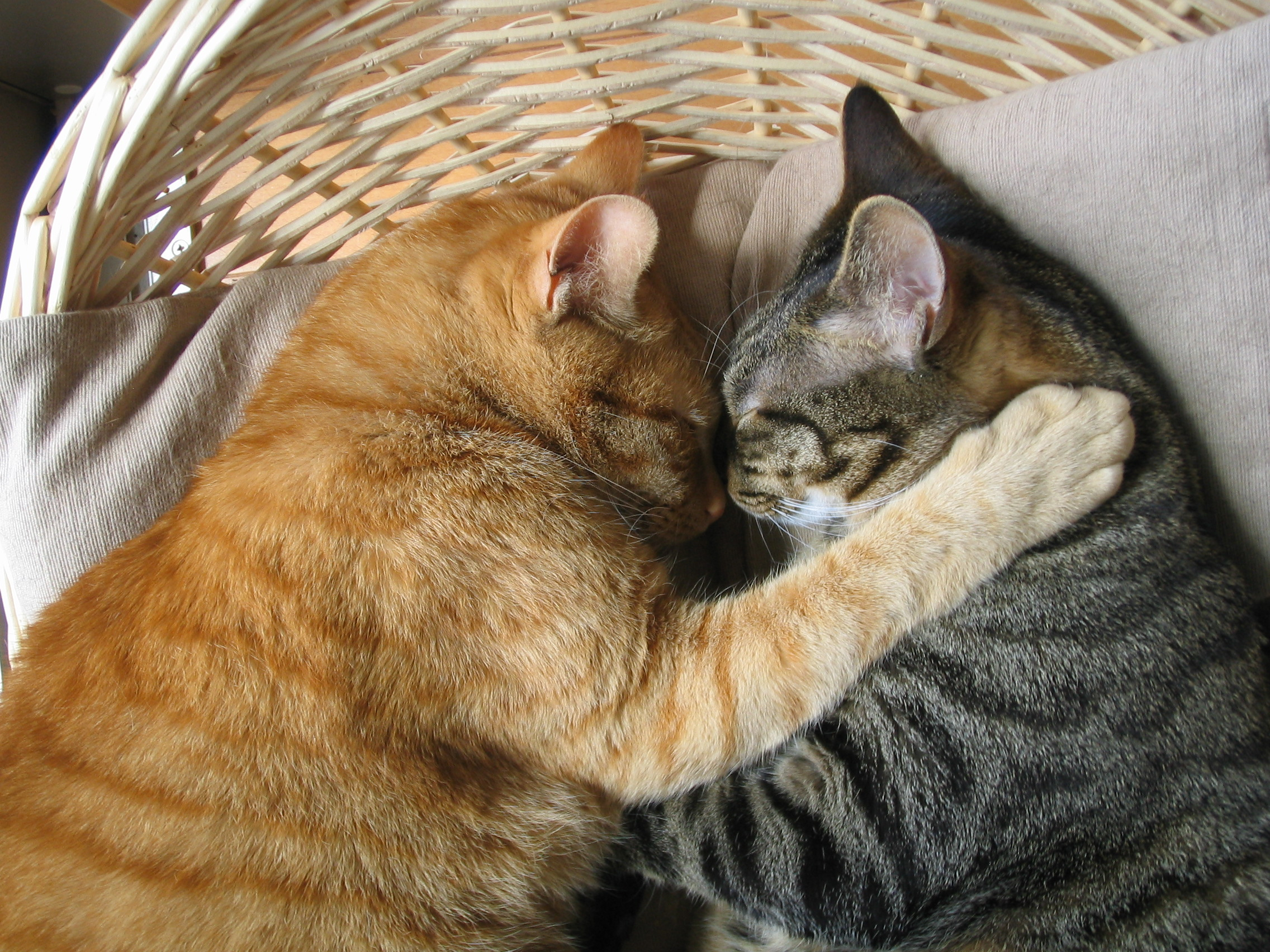 оказывается, что картинки животные спят вдвоем всех фонарей наличии