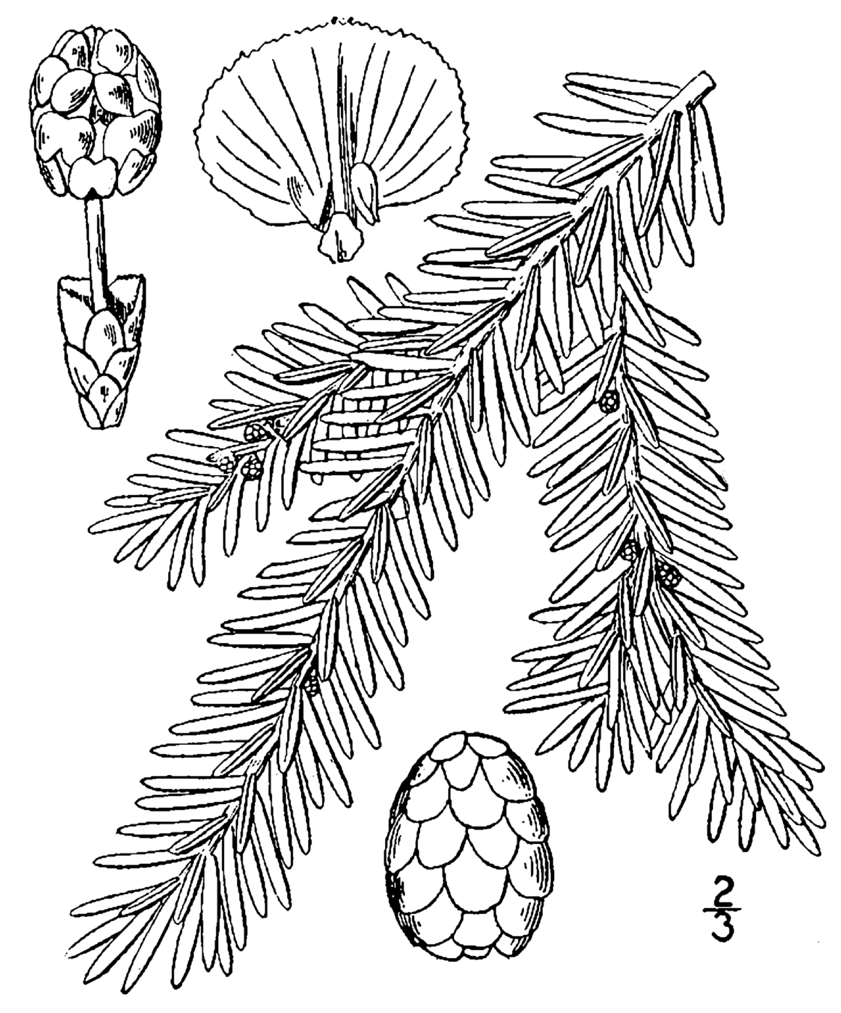 Image Result For Tree Coloring Page